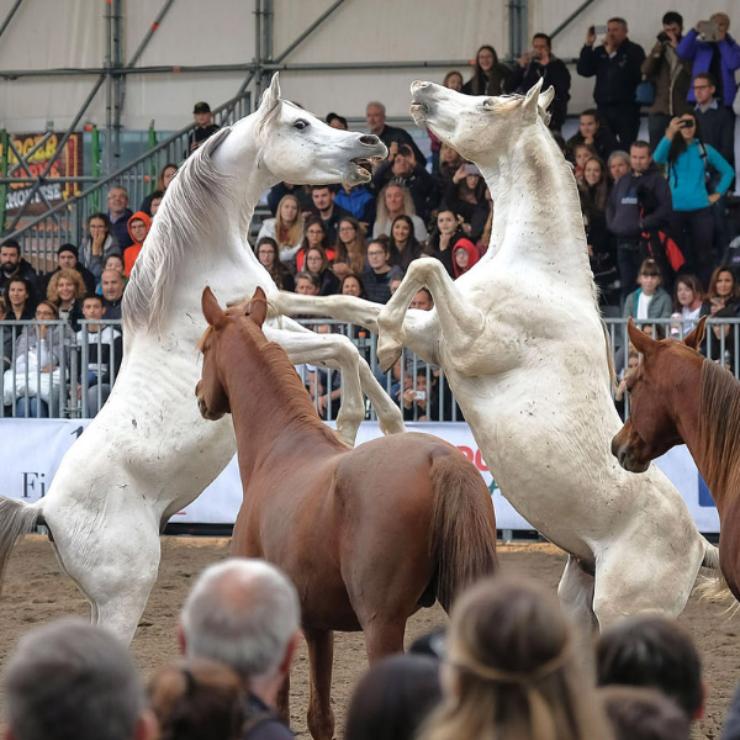 Fieracavalli La fiera dedicata ai cavalli e all'equitazione – Veronafiere